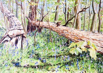 Texel, Gortersmient, Scilla's in het bos, 45x30cm, Acryl op paneel